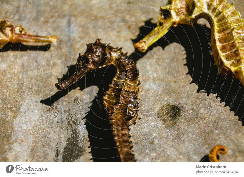 Top view of dried seahorses sold as Traditional Chinese Medicine traditional chinese medicine chinese culture alternative medicine oriental medicine