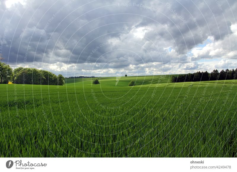 Cornfields and cloudy sky Landscape Agriculture Field Sky Exterior shot Clouds Environment Green Grain field Agricultural crop wide Ecological