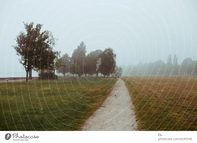 On the Rhine Meadow Lanes & trails foggy Tree Nature Deserted Landscape Fog hazy forsake sb./sth. Calm