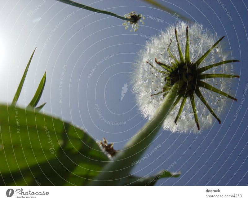 Nature Sky Sun Summer Meadow Grass Spring Dandelion