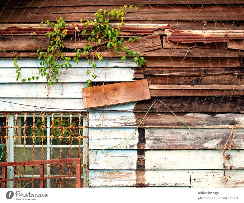 An interesting old wooden shack with vines growing on it Old House (Residential Structure) Metal Poverty Hut Shack Timber
