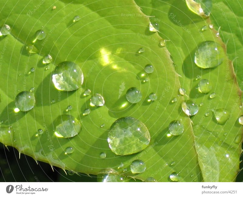 water drops Macro (Extreme close-up) Nature Close-up Reflection waterdrop Detail leaf