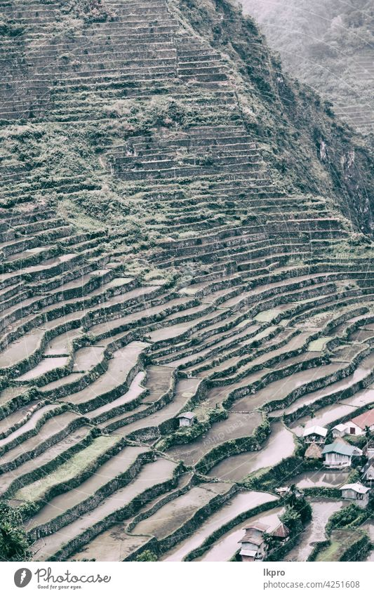 terrace   field for  coultivation of rice banaue philippines mountain nature ifugao asia landscape travel agriculture valley black farm vietnam food china asian