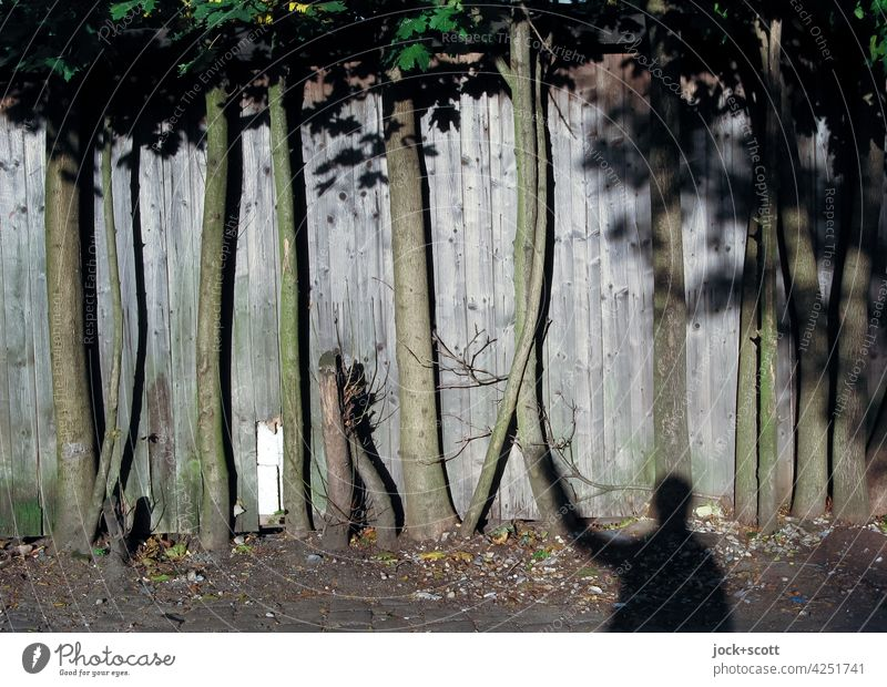 Being one with the trees on the wooden fence Deciduous tree Tree trunk Sunlight Shadow Human being Screening Connection Wooden fence lattice fence Ground