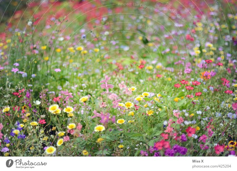 variegated Spring Summer Flower Blossom Meadow Blossoming Fragrance Positive Moody Overgrown Flower meadow Summery Summer's day Meadow flower Garden
