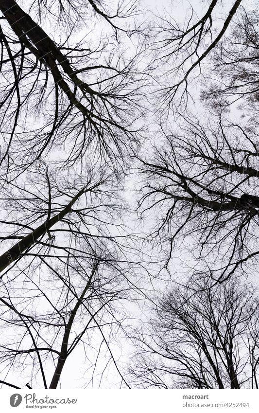 canopy Sky trees Horizon Treetops Tree tops Bleak Winter Autumn Season Black Silhouette sad Gloomy Cold Blue