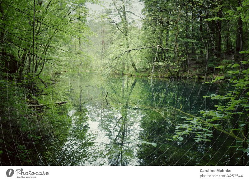 Lake in a clearing - trees reflected in it Forest Idyll Tree Environment Exterior shot Nature Deserted Landscape Green Plant Colour photo Beautiful weather Day
