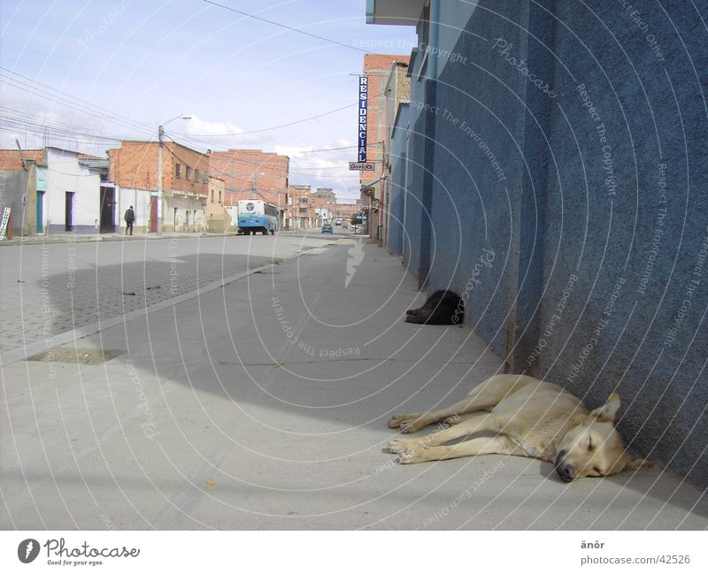 Sun City House (Residential Structure) Street Dog Car Warmth Sleep Physics Fatigue Guatemala South America Bolivia El Alto