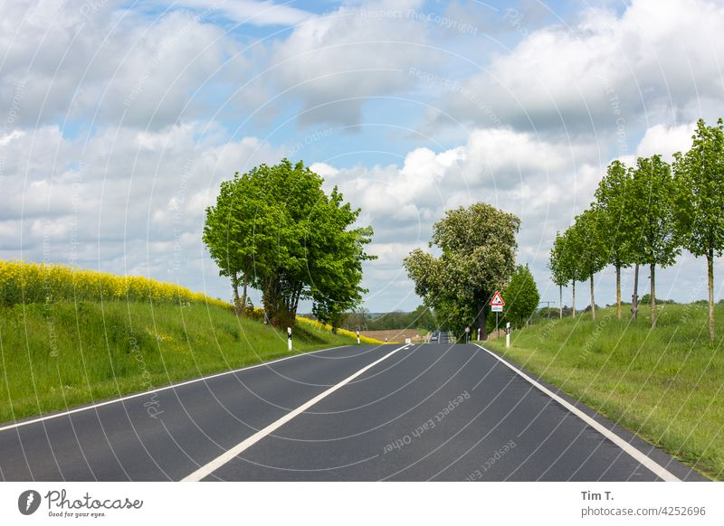 a country road in the Uckermark Brandenburg Street Country road Exterior shot Deserted Colour photo Nature Day Landscape Tree Environment Lanes & trails