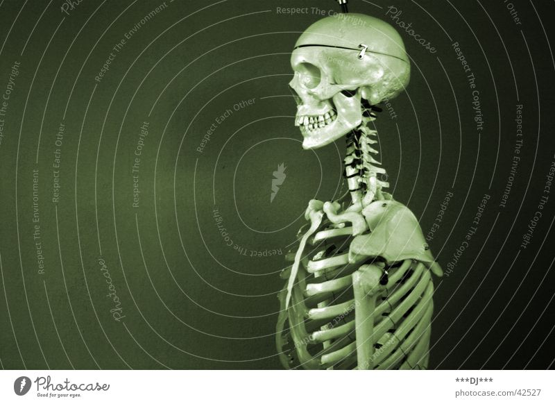 Human being Man Old Death Fear Masculine Health care Putrefy Skeleton Death's head Frightening