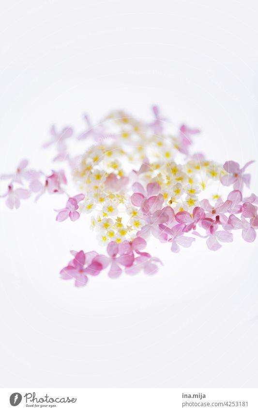 spring lilac Spring Spring fever spring flowers Nature Spring flower naturally Blossom Plant Flower blossom Spring day Garden Natural color daylight