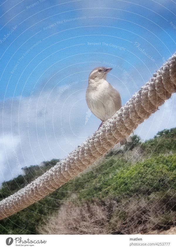 Beachcomber sparrow dunes beö Beautiful weather Curiosity Exterior shot Nature Sky Blue