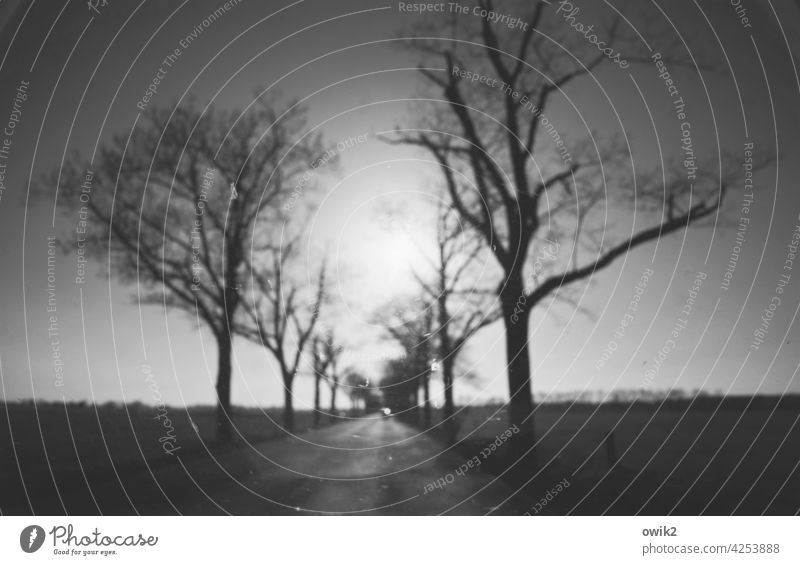 visual In transit Right ahead Street Roadside Tree Environment Hazy Exterior shot motion blur Shallow depth of field Long shot Panorama (View) Sun Sky Clouds