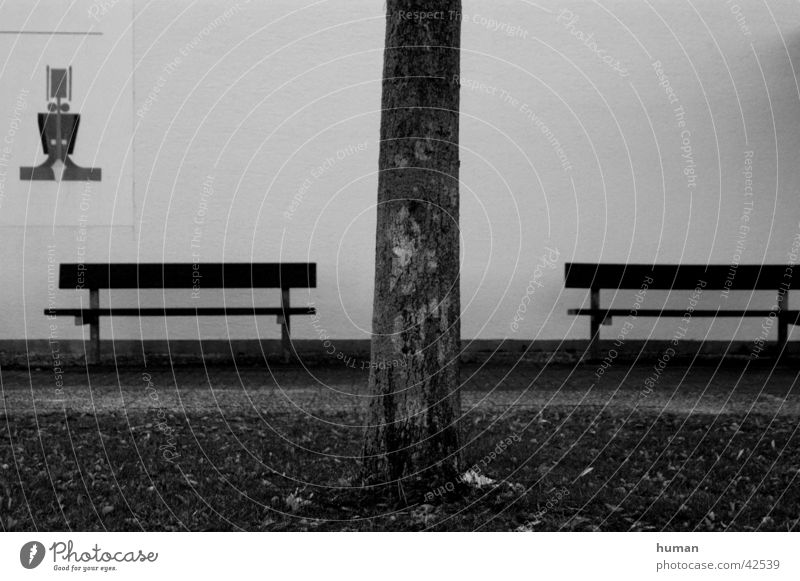 disassociated Tree trunk Wooden bench Divide Bench Black & white photo Signs and labeling