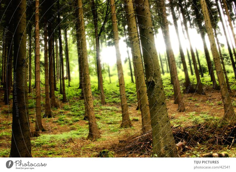 Sherwood forrest Forest Tree Light Woodground Green Nature Escape