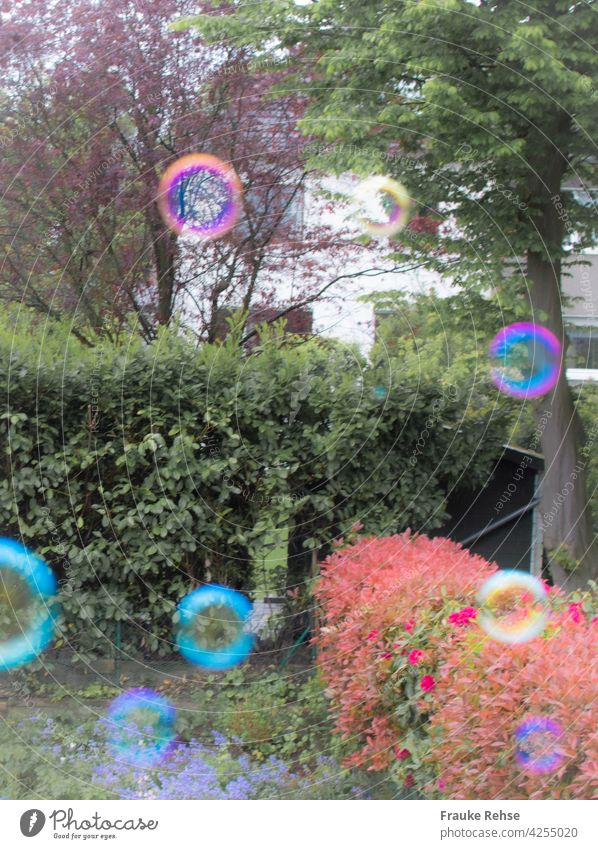 Colorful circles fly in the garden soap bubbles Pink pink Turquoise Yellow Red Green Garden Flying Dazzling Air soapy water Airy Floating Hover Sphere