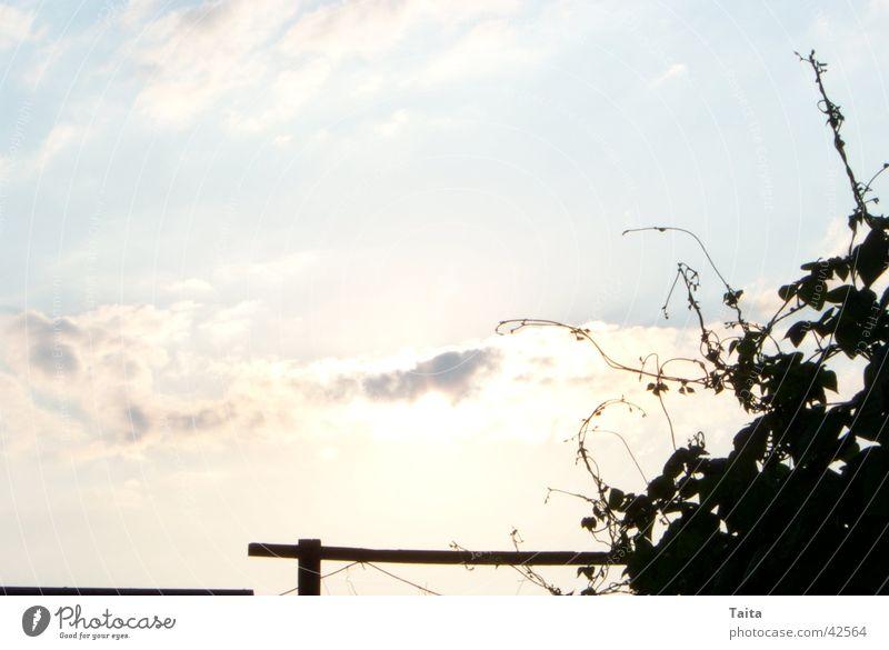 Heavenly Wine Clouds Back-light Sky Vine Shadow Evening