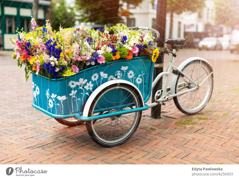 Cargo bike with flowers, Holland, Europe bicycle old vintage wall transport retro wheel street transportation urban cycling city antique basket ride rusty