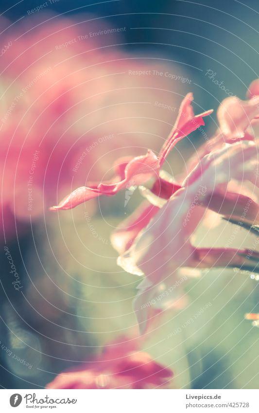 Nature Beautiful Plant Summer Sun Landscape Flower Leaf Environment Warmth Blossom Natural Bright Pink Wild Illuminate