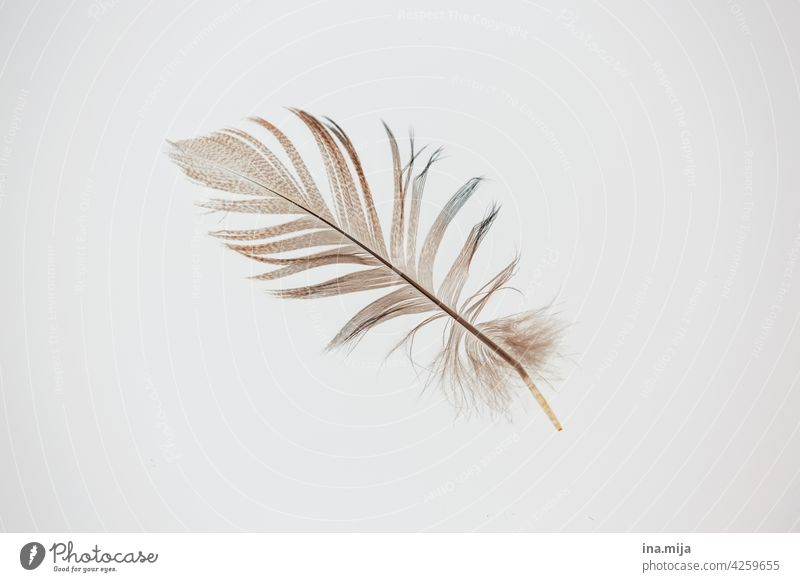 as light as a feather Feather Easy Flying flight Delicate Soft birds Grand piano Bird Ease Smooth Downy feather Fine Decoration Feather headdress feathered