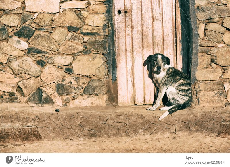 near a house the  dog  waiting alone old door dirty animal wood wall black white building street nobody pet canine head hole background domestic entrance grunge