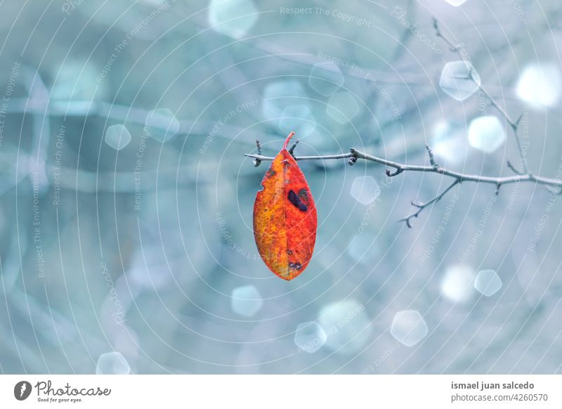 red tree leaf in autumn season nature natural textured outdoors background beauty fragility freshness autumn leaves autumn colors autumn mood fall fall colors