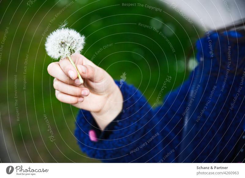 Child hand with dandelion Dandelion Childhood memory Infancy Children`s hand Hand blow Plant Nature Spring Close-up Exterior shot Sámen Flower Colour photo