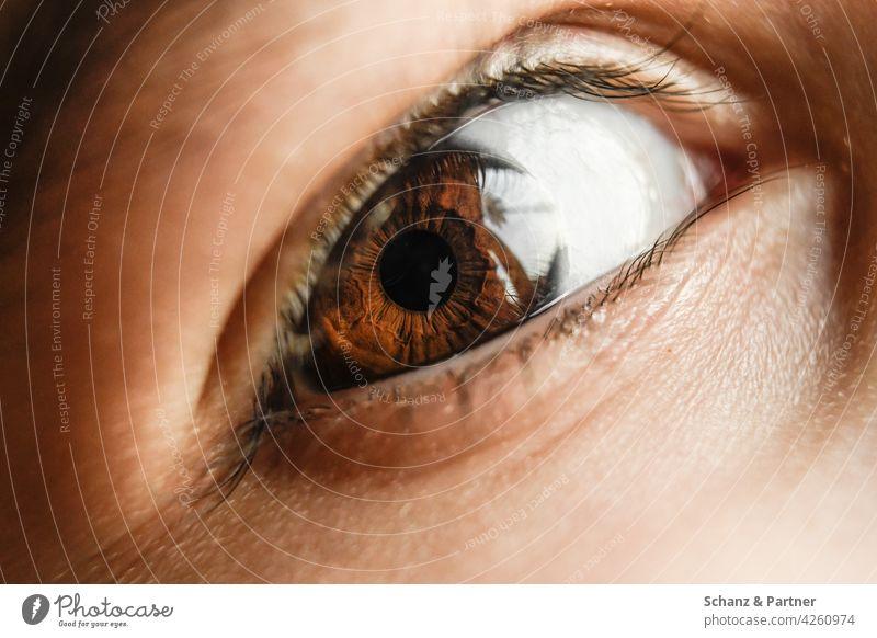 Iris of an eye in close-up Eyes iris Eyelash Eyelid Pupil Close-up Brown brown eyes Looking Face Detail Macro (Extreme close-up) Vision Colour photo Eye colour