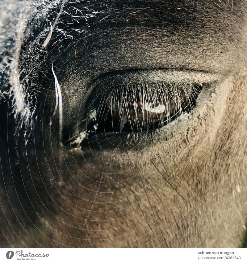 Moment of a horse Horse Eyes Looking Exterior shot Colour photo Animal portrait Mane Animal face Head Looking into the camera Nature Mammal Farm animal