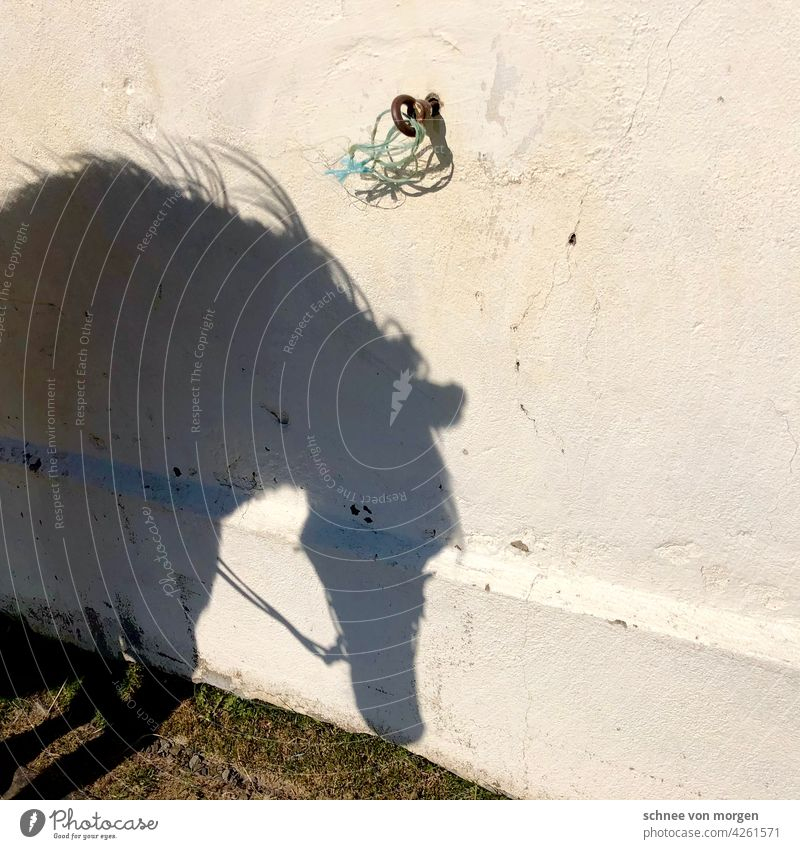 Shadow of a horse horses Nature Summer Animal Sky Agriculture Farm animal Exterior shot Colour photo Environment Sunlight Day Deserted Landscape