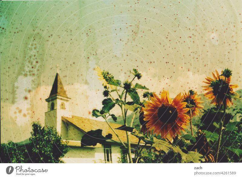 heat wave analogue photography Scan Analog Experimental Lomography Sunflower Church Church spire Flower Plant Village Summer