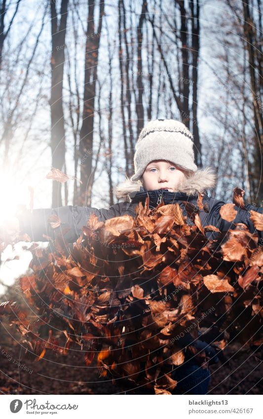 Autumn Game Autumnal Playing Child Leaf Seasons Youth (Young adults) Young man Emotions Tree Forest Infancy Childhood memory Life Nature Environment Human being