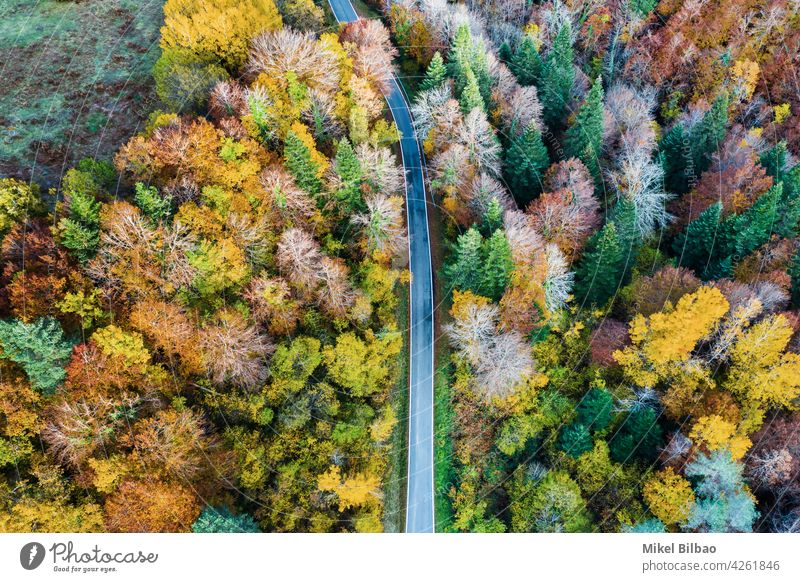 Aerial view of a decidual forest in autumn and a road. deciduous aerial tourism environment explore spain travels road trip scenery nature above fall landscape