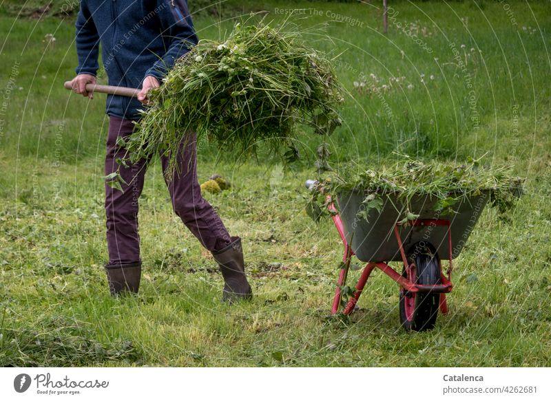 Man loads wheelbarrow with scythed grass Outdoors Gardener labour Green cut grass Gardening masculine person flora Nature Plant Grass Spring daylight Lawn