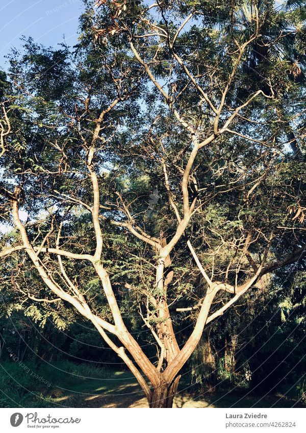 Tree in the park, morning light Tree bark old tree Nature Exterior shot forest green Tropical Forest Deserted Plant Tree trunk Leaf Branch Spring Green Treetop