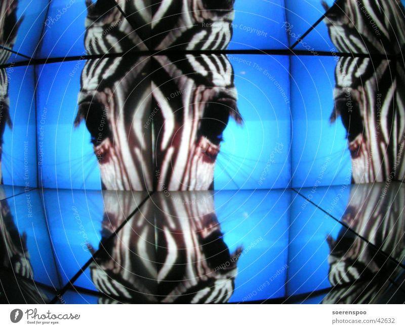 A, B, Zebra Reflection Science Center Bremen Light Striped Tunnel Blue
