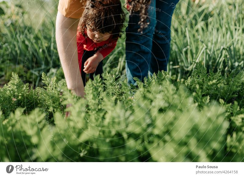 Mother and daughter gardening motherhood Mother with child Child 1 - 3 years Caucasian Gardening Carrot togetherness Happy Infancy Woman Happiness Love