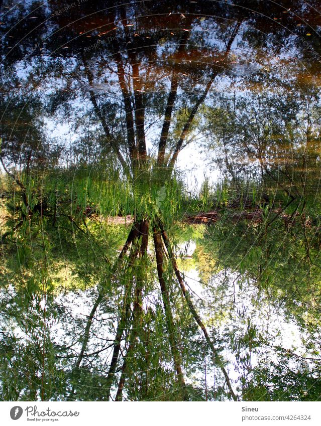Tree reflected in the water Landscape trees Forest Nature Reflection reflection Trees in the lake Pond Water reflection Surface of water Reflection in the water