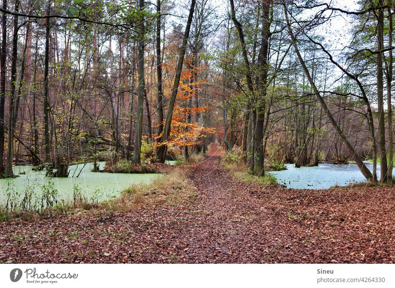 Forest path through the flow forest path Forest lake Tree trees leaves Nature foliage Autumn Autumn leaves autumn colours Autumnal colours Automn wood