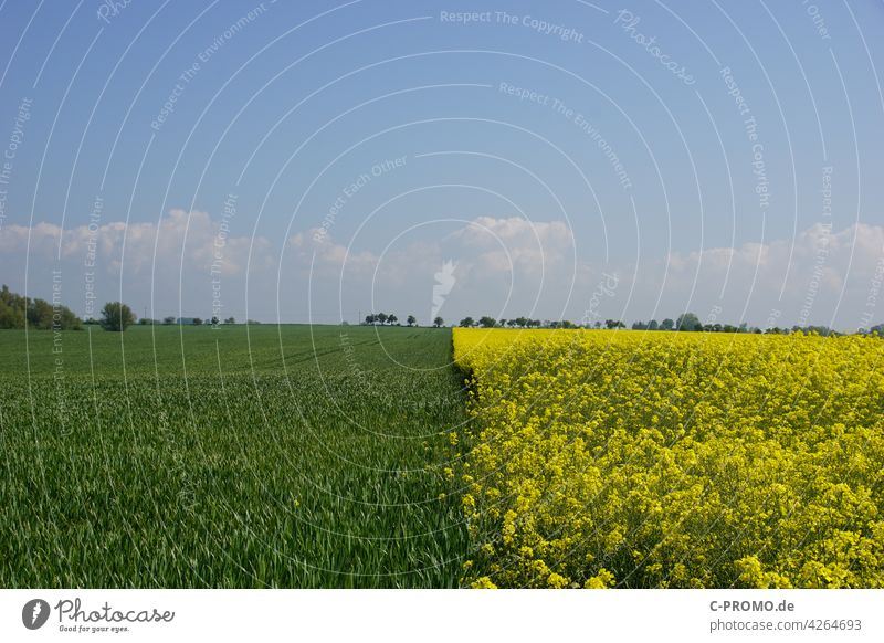 split field green yellow agrarian Landscape fields Canola Green Yellow Sky Divided Border Neighbor Agriculture Deserted Copy Space top Spring Summer