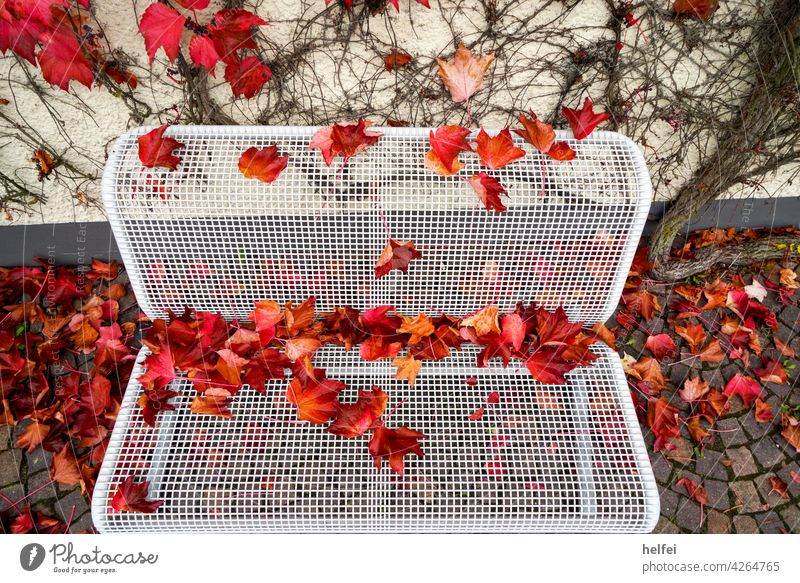 White park bench with metal grille seat covered with colorful autumn foliage Landscape Orange Leaf Nature Park Autumn Yellow Seat naturally Bench Wood