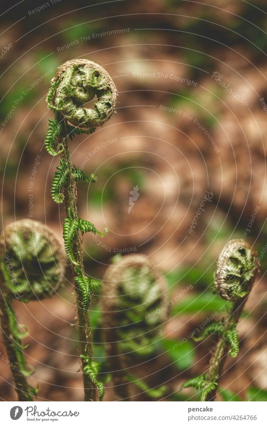 opening hours Fern Wild plant Forest Endangered species safeguarded snail shape Crumpet spring Shallow depth of field Environment Close-up Leaf curled