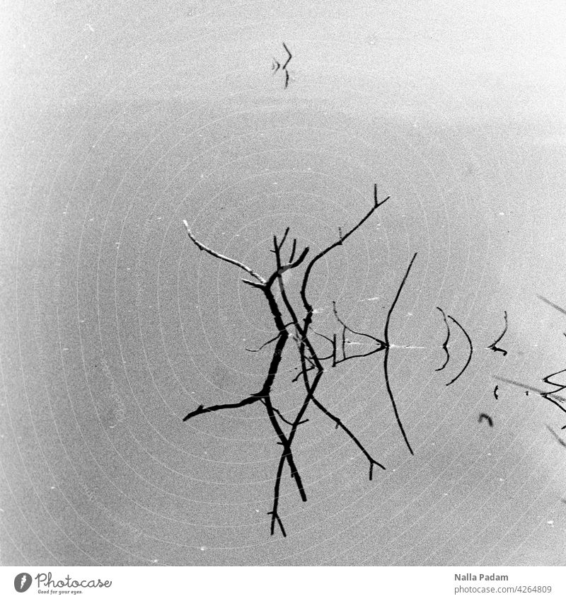 Dancing couple Analog Analogue photo B/W black-and-white Black & white photo Water Branch Branchage reflection Exterior shot Nature dance