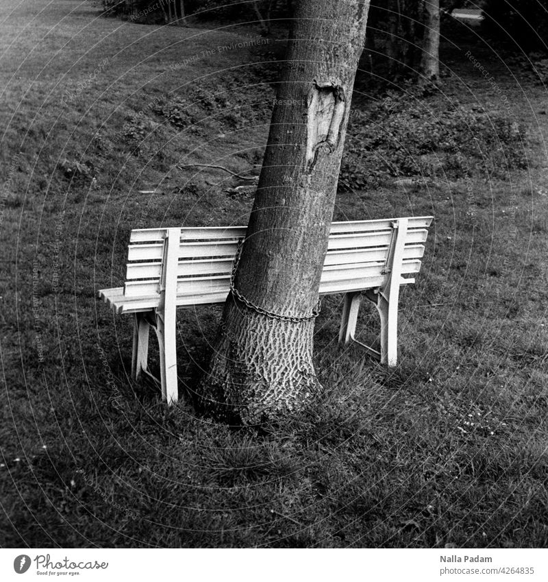 Bench chained to tree Analog Analogue photo B/W black-and-white Black & white photo Tree Chain Meadow Bright Dark bark Seating Sit Site trunk Tree trunk