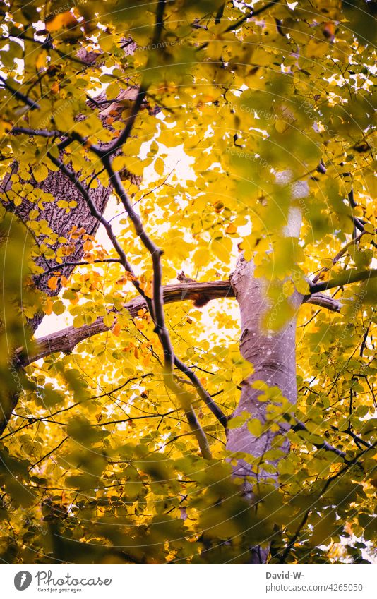Squirrel high up in the tree Tree Tall Above leaves branches foliage Autumn Autumnal Sunbeam covert Animal Forest Nature