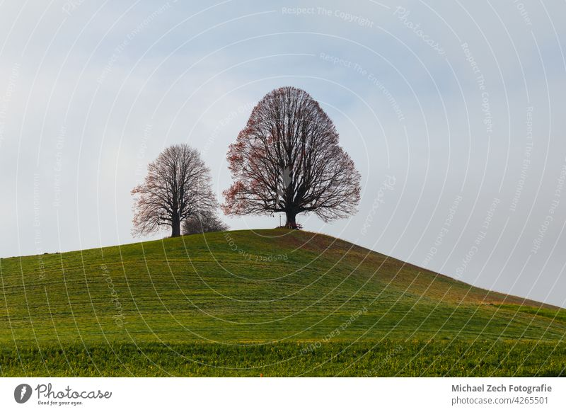 Leafless trees in spring on a Swiss alpine pasture landscape horizon single green leafless grass field nobody outdoors environment one nature meadow lone plant