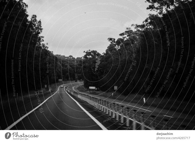 On a big trip to Sydney. Like a wrong-way driver on the street always left. Street trees Forest Nature Tree Landscape Environment Deserted Exterior shot
