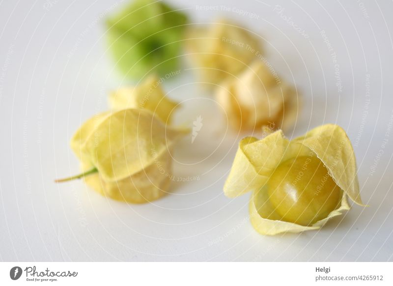 Physalis peruviana or Andean berry peruvial physique Fruit Edible Delicious salubriously Vitamin-rich Mature Garden Food Close-up Healthy Colour photo Fresh