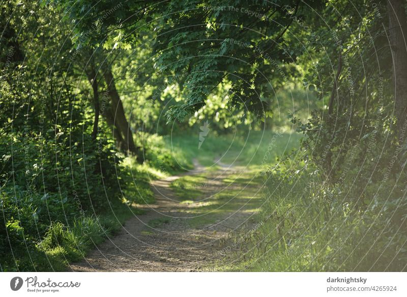 Path through a forest in sunshine and springtime Spring off Tree Grass Hiking Forest Environment Landscape Nature Green Exterior shot Summer naturally Footpath