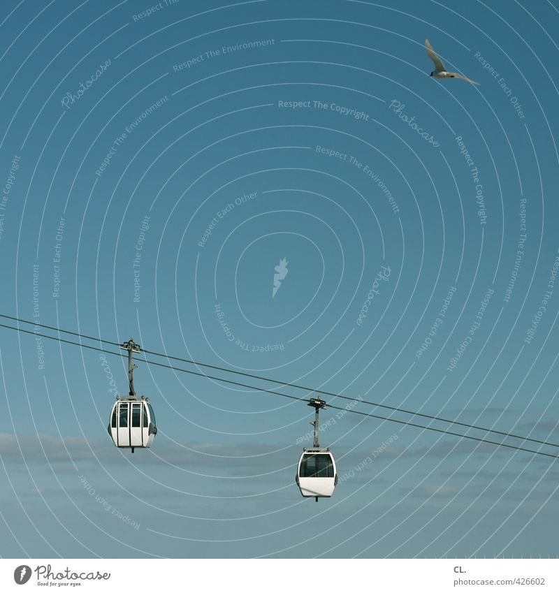 gondola around Vacation & Travel Tourism Trip Far-off places Freedom City trip Summer Summer vacation Nature Sky Cloudless sky Spring Beautiful weather Animal